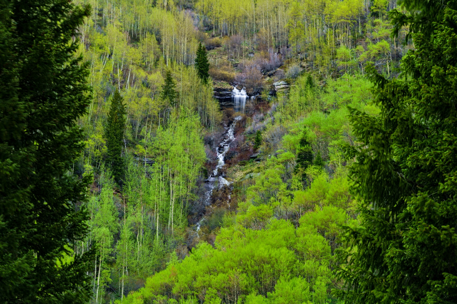 Mountain Waterfall in Spring Cascading Creek